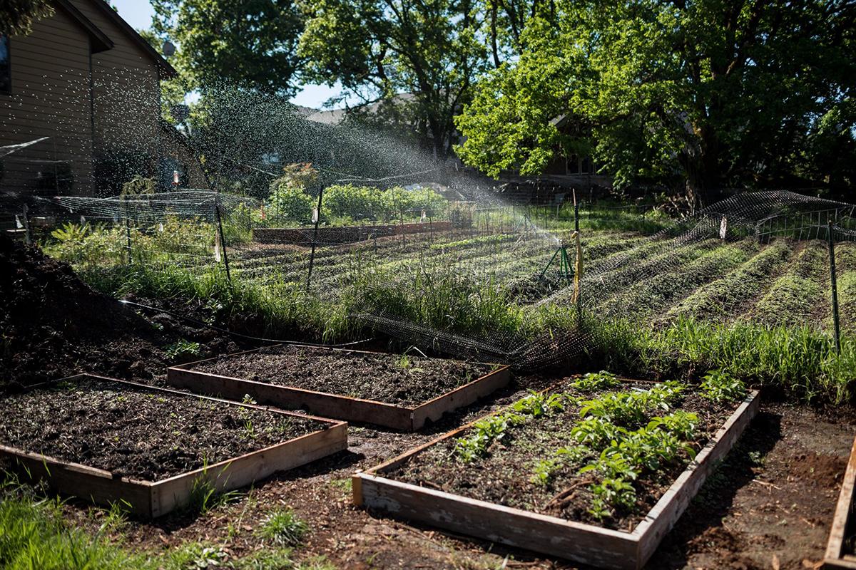 Leon Araiza's home garden