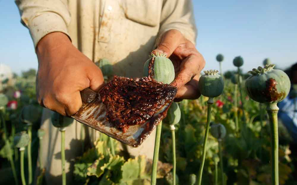 Extraction of poppy sap