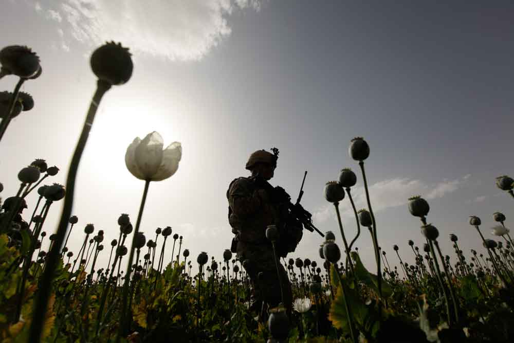 U.S. soldier in Afghan poppy field