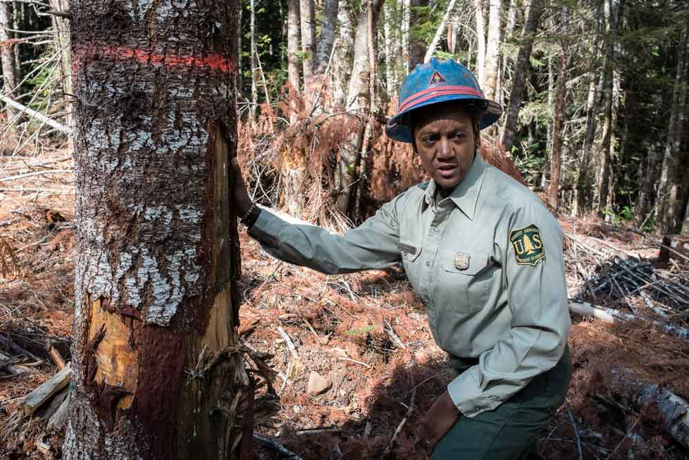 Glenda Goodwyne inspects a scarred tree