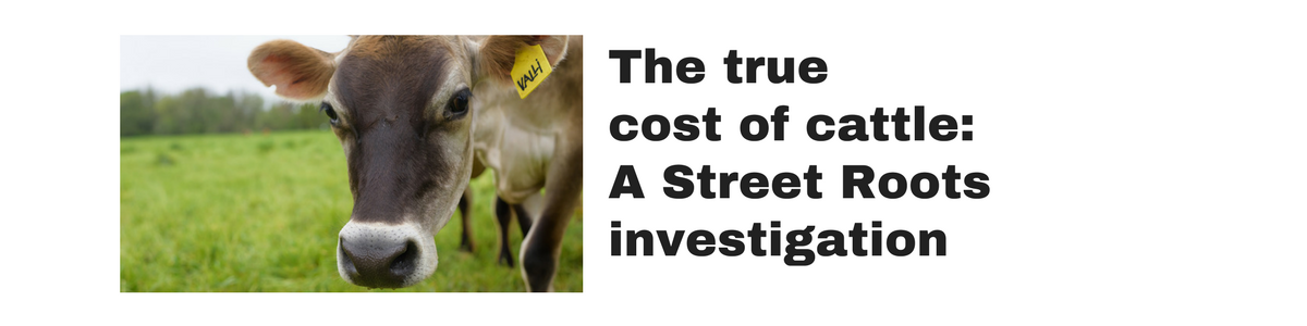 The true cost of cattle: A Street Roots investigation (click or tap for the story)
