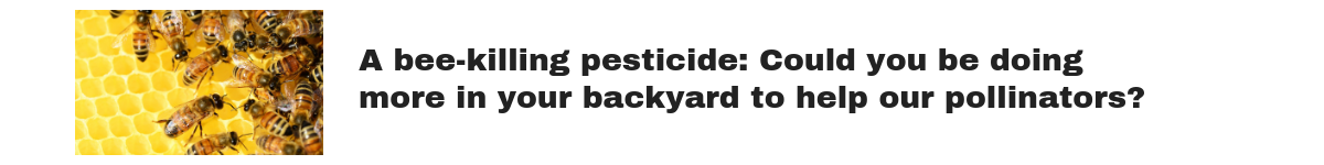 Promo for story about neonicotinoids and bees