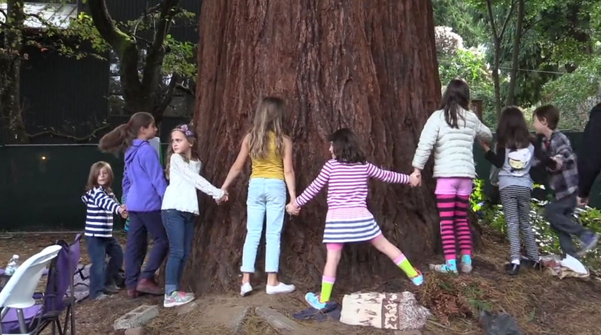 Children surround a tree