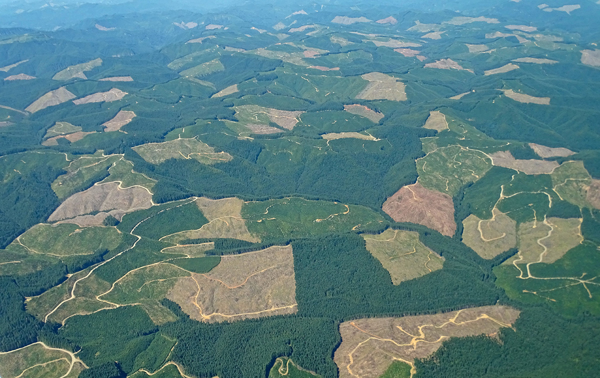 Aerial view of a clear-cut forest