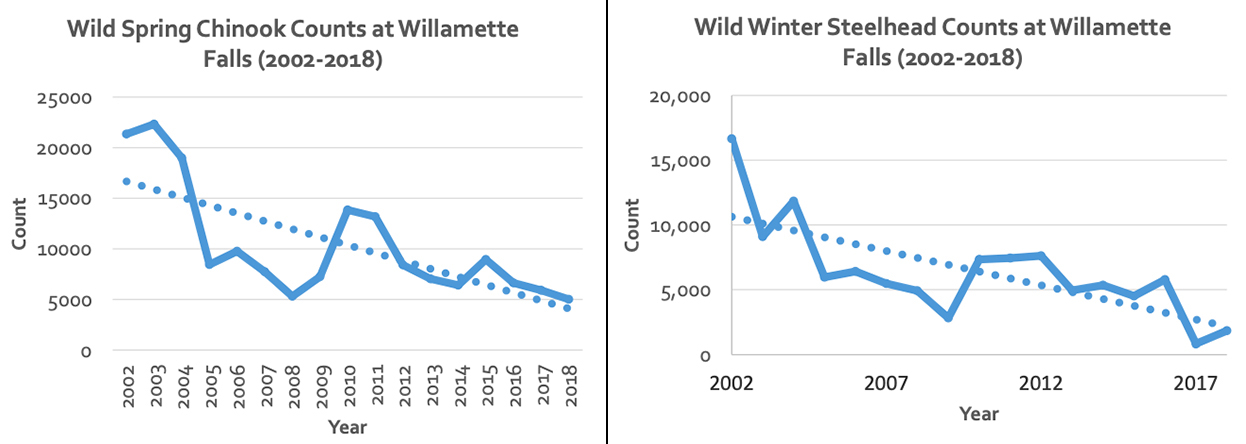 2 Charts: Wild Spring Chinook Counts & Wild Winter Steelhead Counts