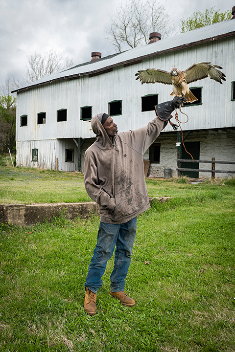 Rodney Stotts stands with Raven, a red tail hawk whose wings are spread open