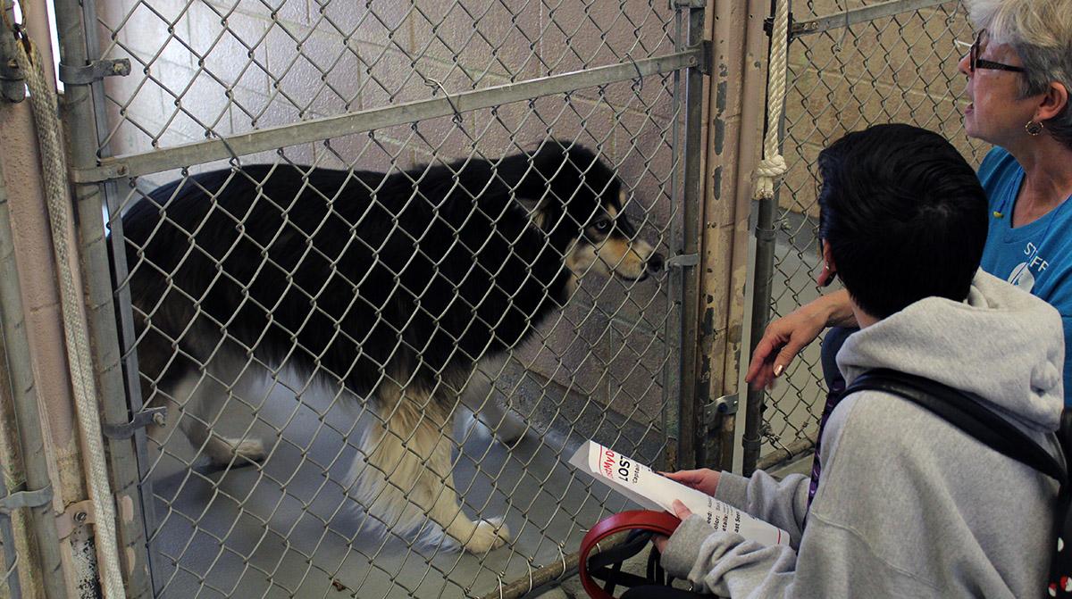 A dog at Multnomah County shelter