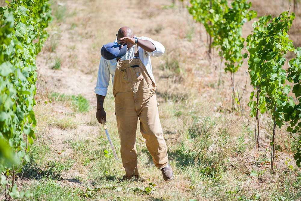 Bertony Faustin in his vineyard
