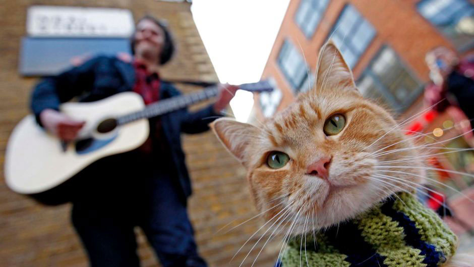 """A Street Cat Named Bob"""