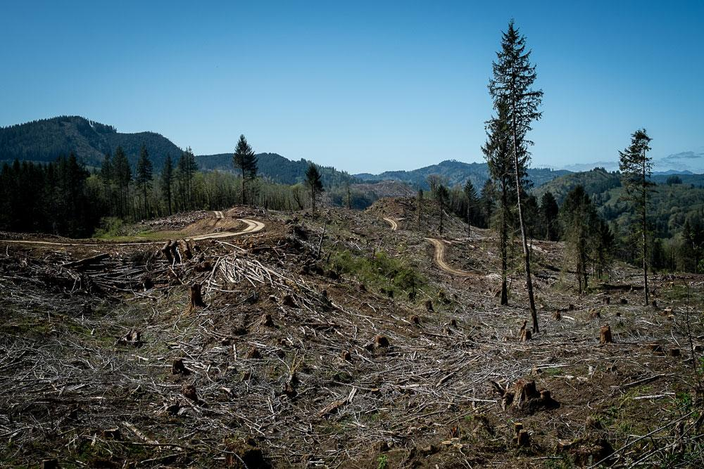 Oregon Department of Forestry Fails to Step Up to their Climate Responsibility