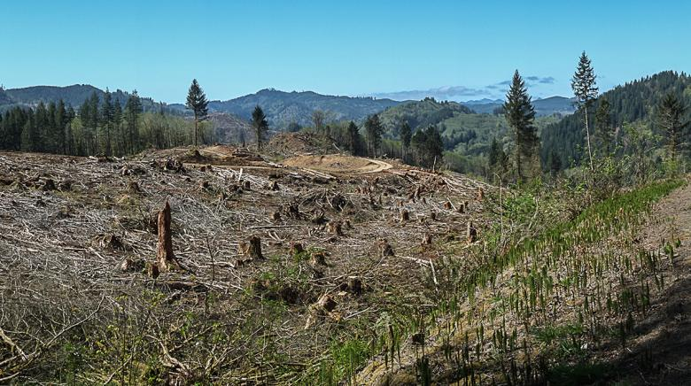 Cut and run dry: Do Oregon tax laws favor the timber