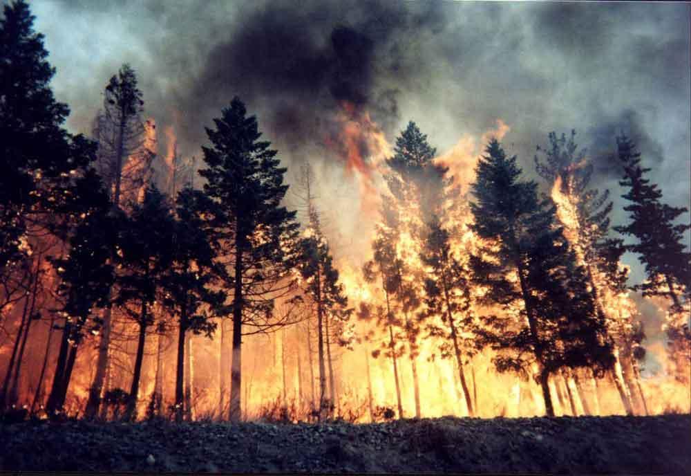 Oregon forest fires: Let them burn   Street Roots