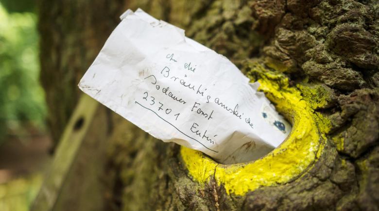 Groom Oak tree