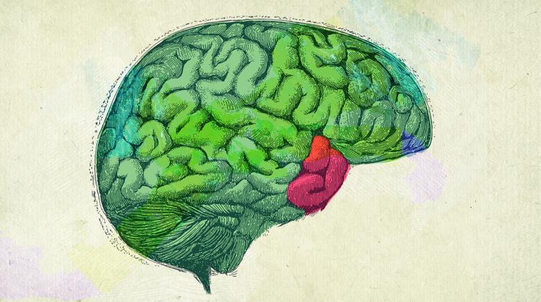 Illustration of a human brain