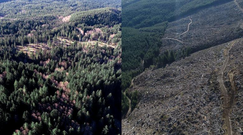 Side-by-side comparison of FSC-certified and non-certified forests
