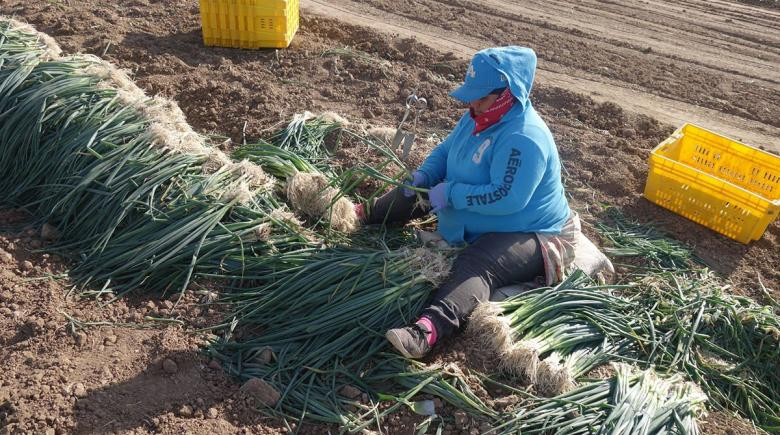 Oregon farmworker in the field