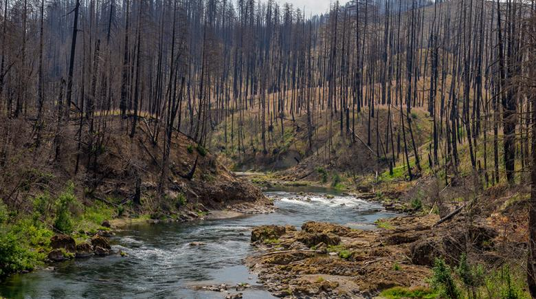 The Jack Fire burned more than 23,000 acres near Glide in July, leaving scorched trees and ground vegetation in its destructive path on both sides of the North Umpqua River.