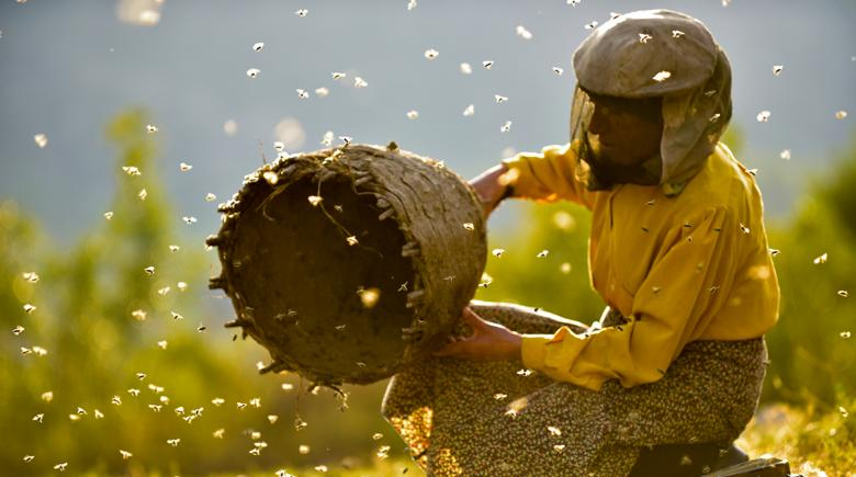 A beekeeper with bees