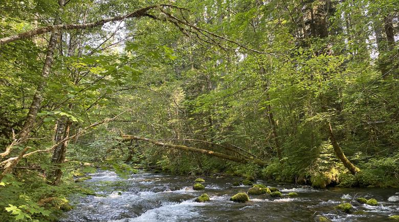 McKenzie River lined with trees