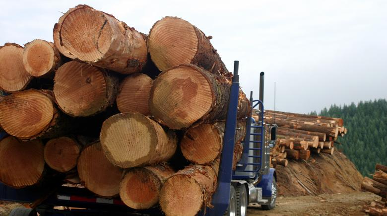 Logs on the bed of a truck