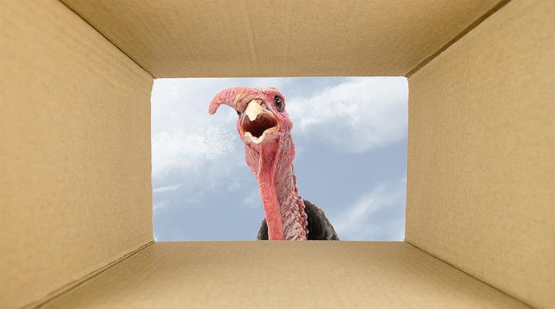 A live turkey is seen through a cardboard box (photo illustration)