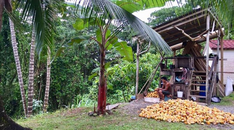 Cocao at Caribeans
